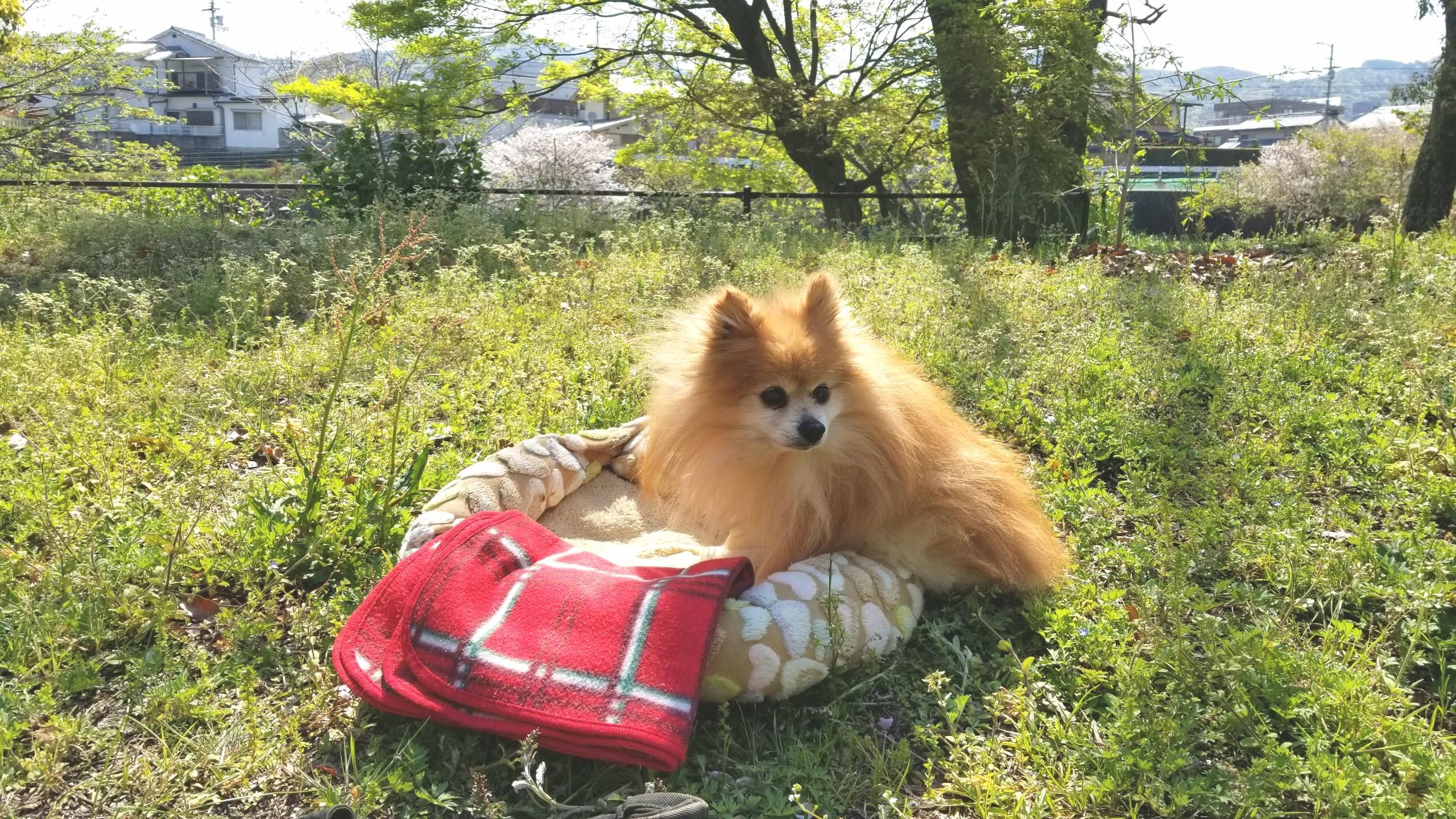 愛犬ペット,ふれあいおでかけ散歩日光浴,食べない病気心配不安白内障