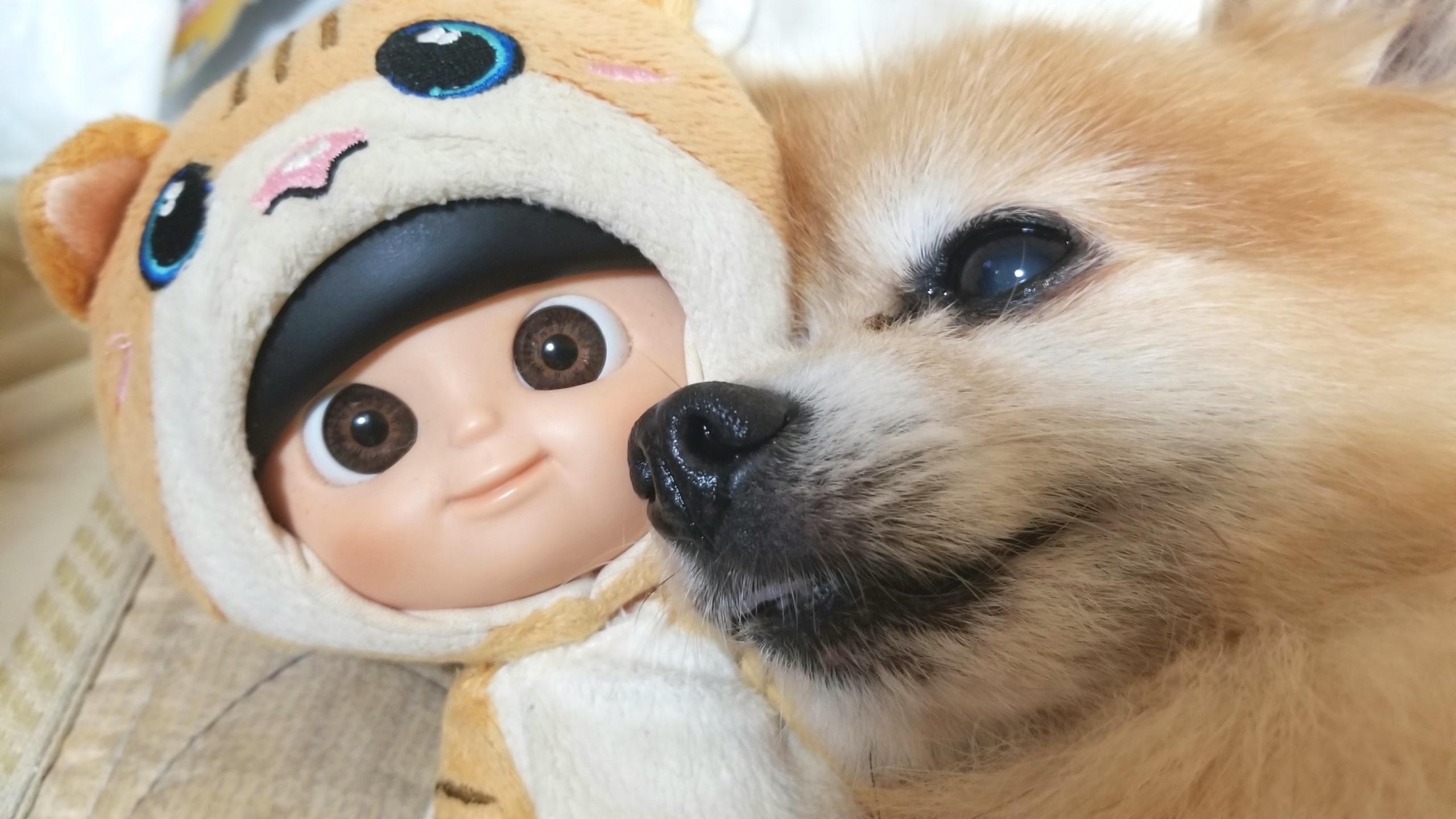 愛犬家,ペット,ポメラニアン,大好き,ラブ,心配,食欲不振,超絶可愛い