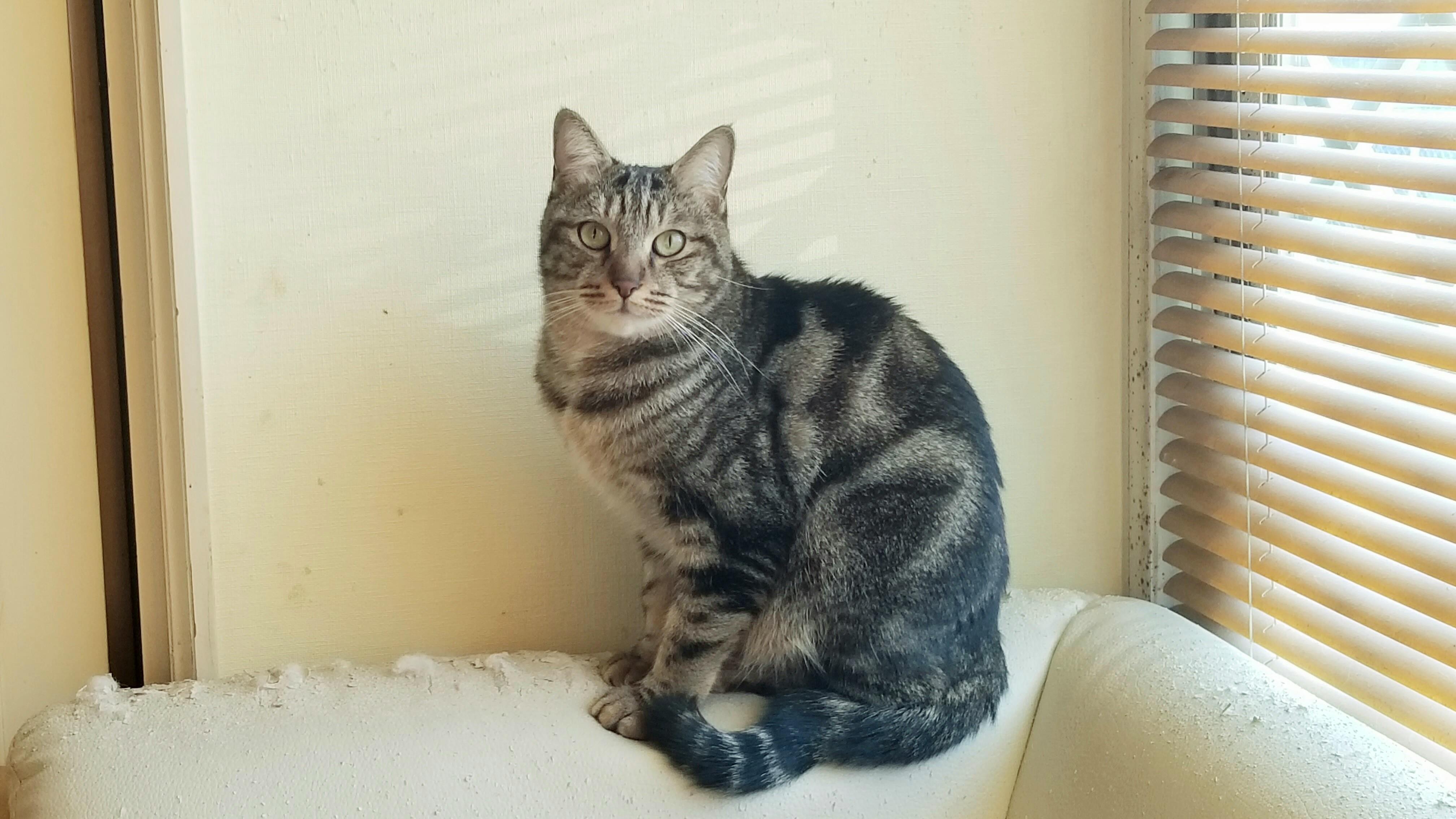おばいとこの猫にゃんこかわいい素敵な画像写真野良黒綺麗かっこいい