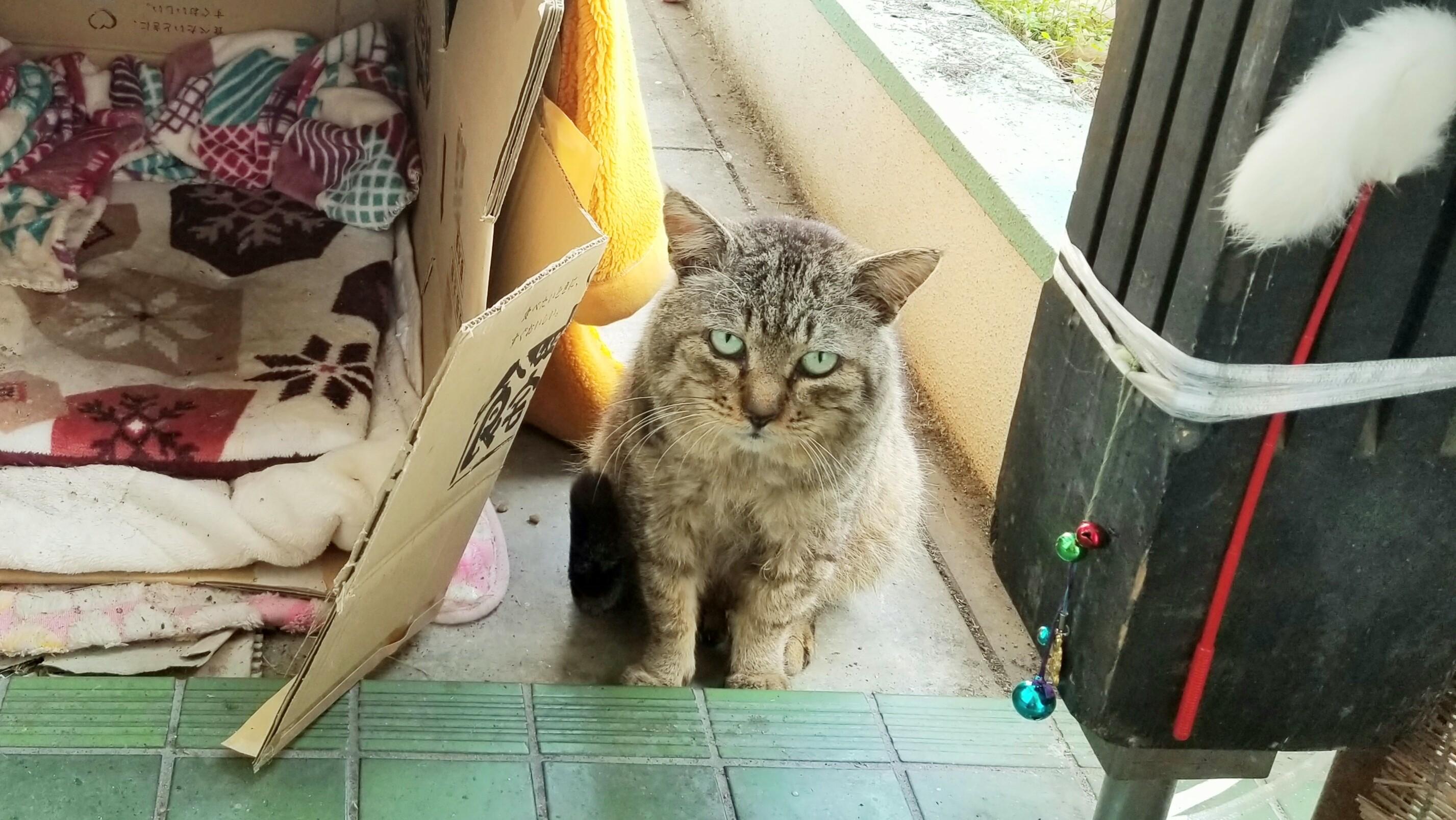 ぬし野良猫保護にゃんこの日常生活ニャンインスタグラム人気ブログ