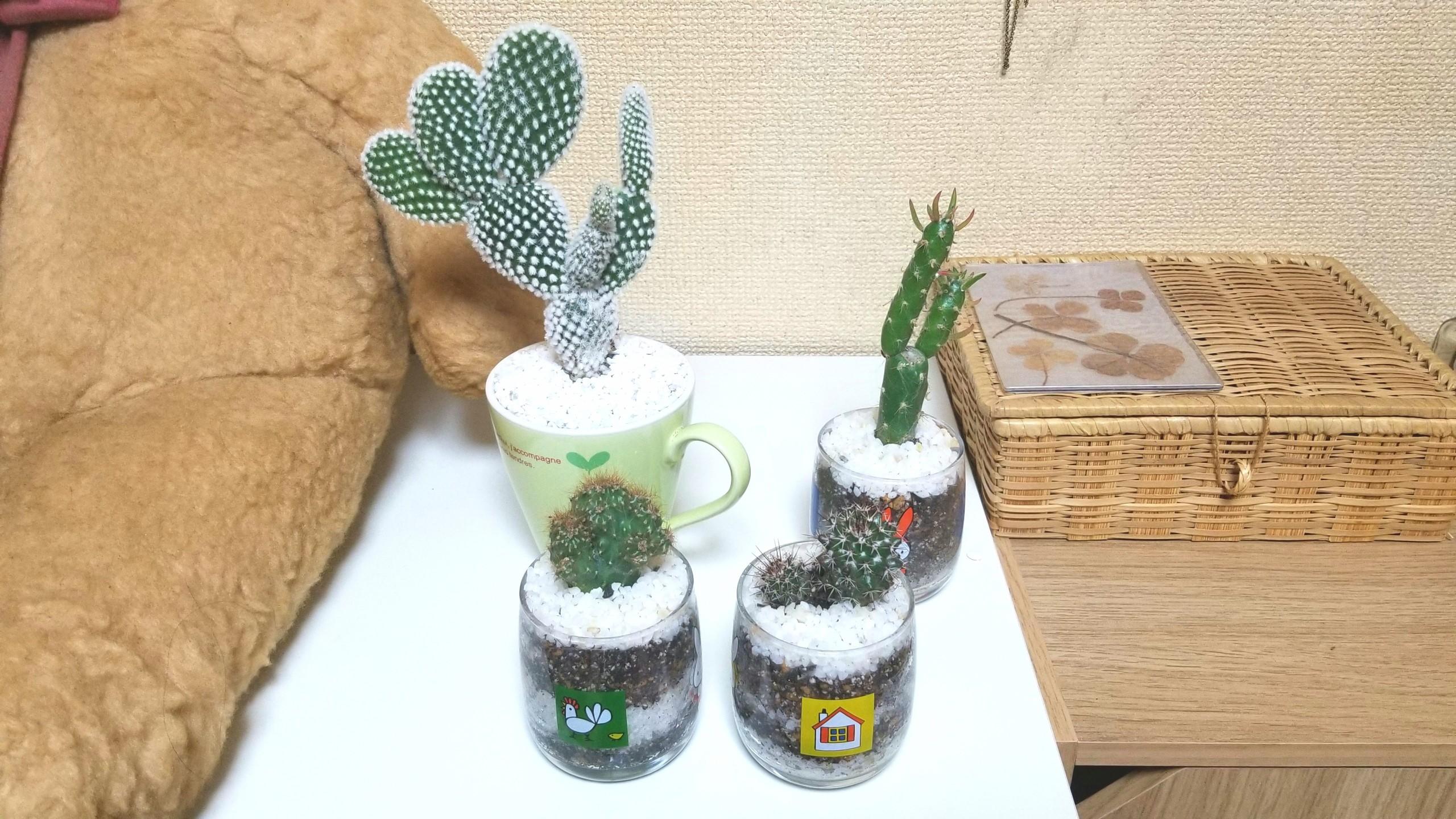 小さいサボテン,安いおしゃれかわいい,インテリア運気,植木鉢,人気