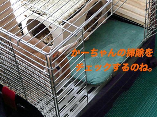 P1130955のコピ