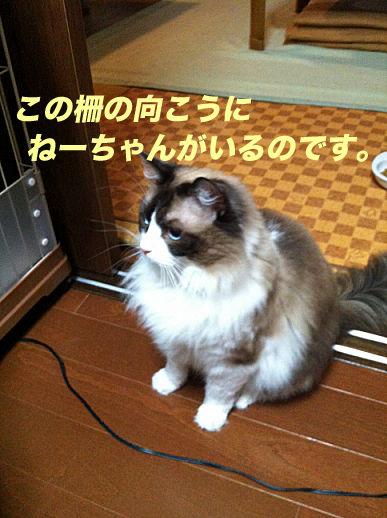 IMG_8970のコピー