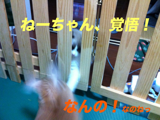 IMG_3478のコピー
