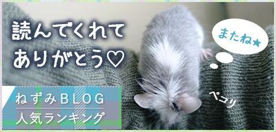 にほんブログ村 小動物ブログ ネズミへ