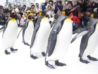 ペンギンくんの行進4