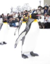 ペンギンくんの行進の3