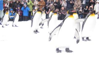 ペンギンくんの行進1