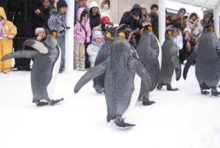 ペンギンくんの後ろ姿