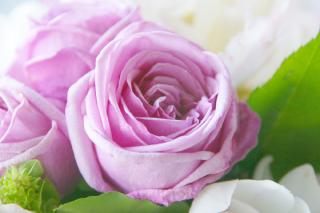 バラ(ばら、薔薇)の花言葉(はなことば、花ことば)