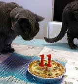 cake-tiff1
