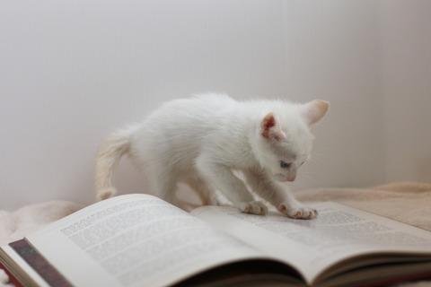 cat_book