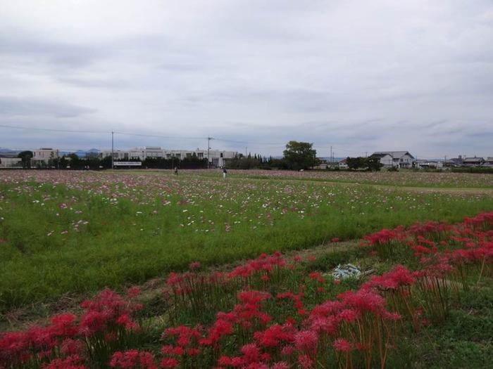 FujiwarakyoAto-7