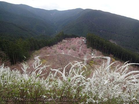 桜咲く天空の庭!高見の郷みぃつけた!