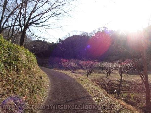 ひっそり梅を楽しむ!万葉の森みぃつけた!