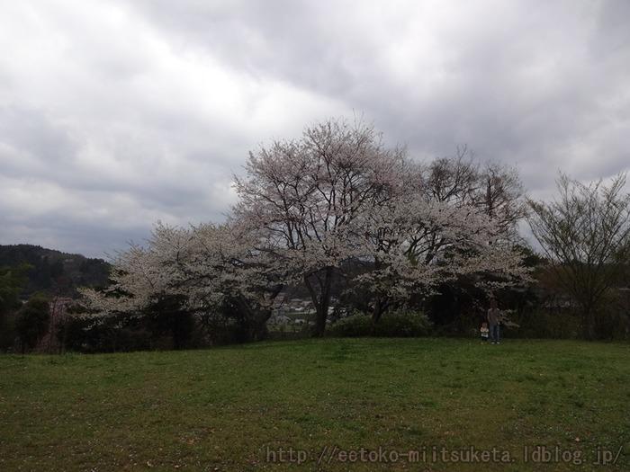 2015_Sakura (2)