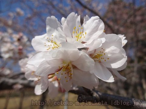 春はやっぱりお花見!桜スポットまとめ!