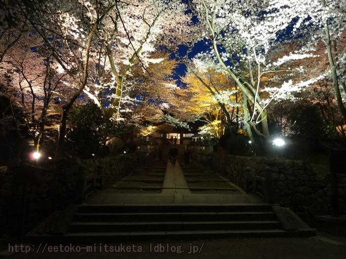 2014_Sakura (5)