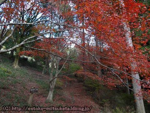 2015奈良の紅葉みぃつけた! ~鳥見山公園 編~ (2/4話)