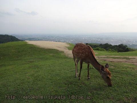 奈良の街を一望!若草山展望台みぃつけた!