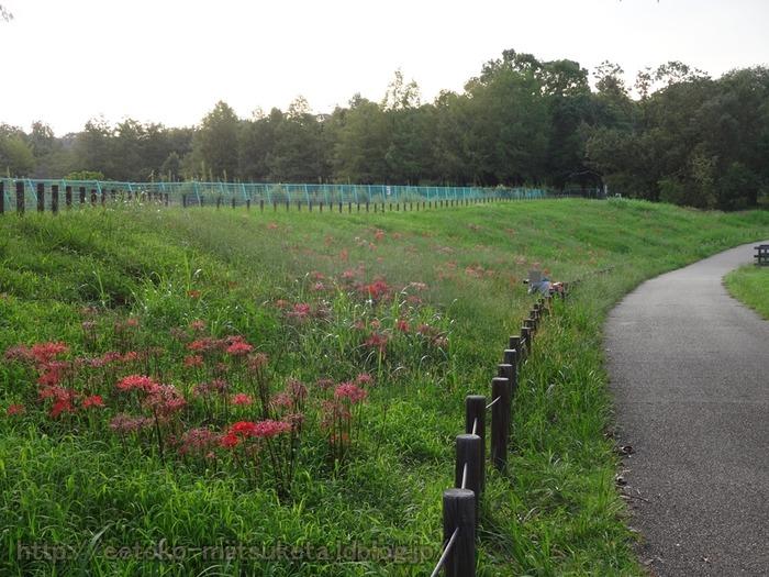 UmamiKyuuryou Park (19)