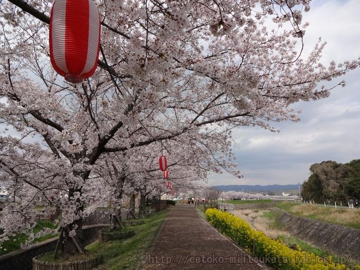 2014_Sakura (3)