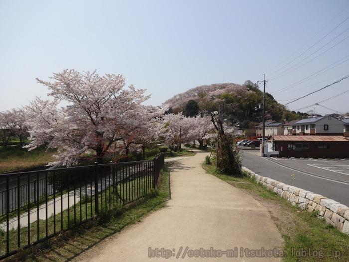 2017_Sakura (1)