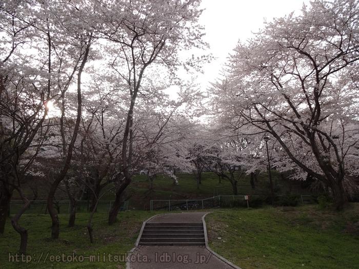 2014_Sakura (4)