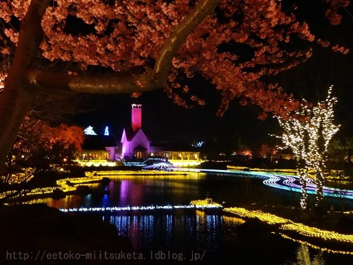 2014_Sakura (1)