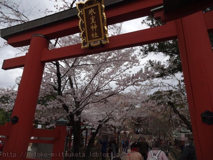 2016_Sakura (1)