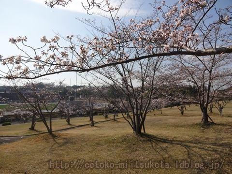 桜が美しい運動公園!鴻ノ池運動公園(奈良電力鴻ノ池パーク)みぃつけた!
