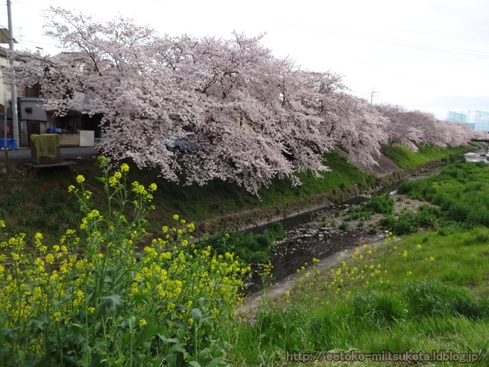 Sahogawa (11)