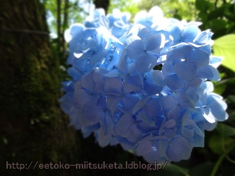 雨でもお出かけ!紫陽花スポットまとめ!