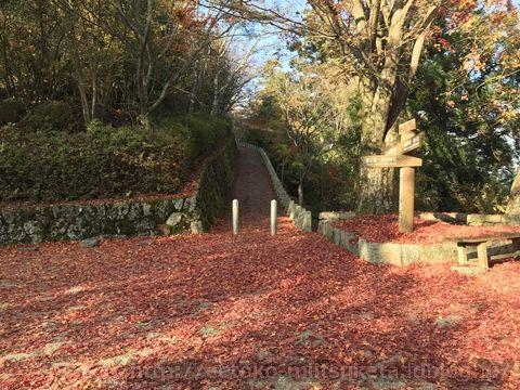 紅葉の絨毯がお出迎え!高城山展望台みぃつけた!