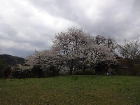 春の宇陀市みぃつけた! ~かぎろひの丘万葉公園 編~ (2/3話)