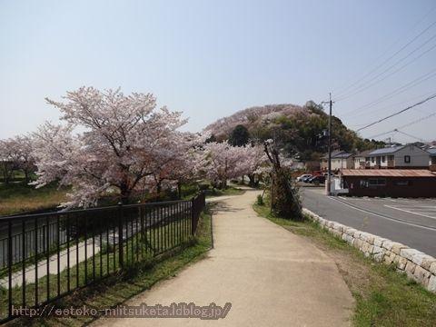 桜色の山!三室山みぃつけた!