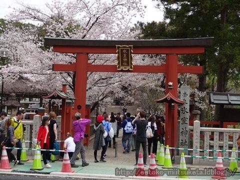 奈良一番桜!氷室神社みぃつけた!