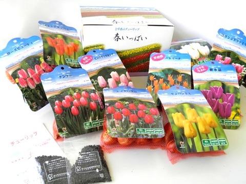 チューリップ(春いっぱい)