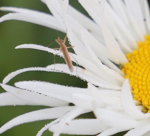 20200629 14花と虫