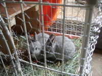 2012こウサギ_002