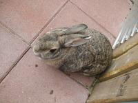 2012こウサギ_008