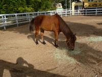 朝日の中の馬1120
