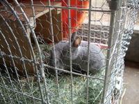 2012こウサギ_001