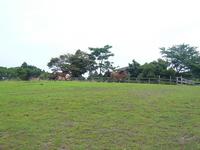 P1070533