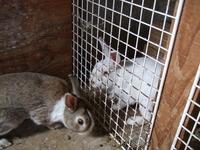 2012こウサギ_005