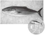 フルーツ魚1