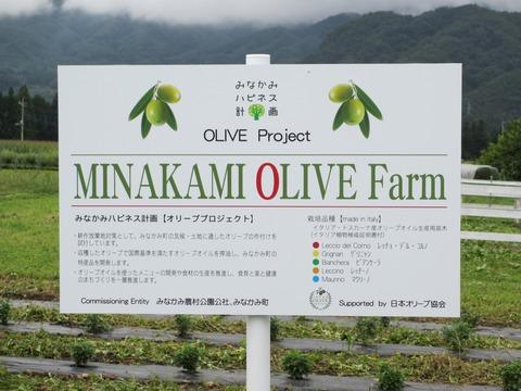 olivebuner
