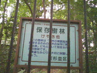 090705_ayumi_asagaya_yashikimori2.jpg