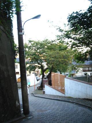 DSC09051.JPG
