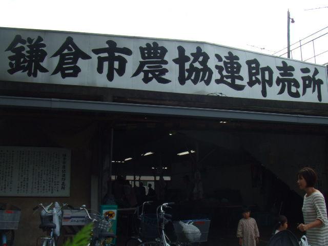 kamakura-renbai.JPG